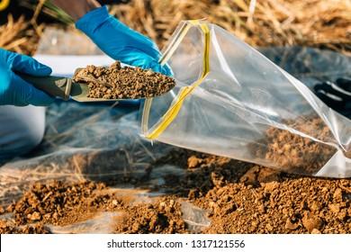 Bodentest. Agronomist, der Boden mit Gartenschaufel in Bodenprobenbeutel im Freien legt. Umweltforschung