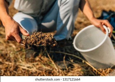 Soil Testing. Agronomy Specialist taking soil sample for fertility analysis. Environmental protection, organic soil certification, field work, research