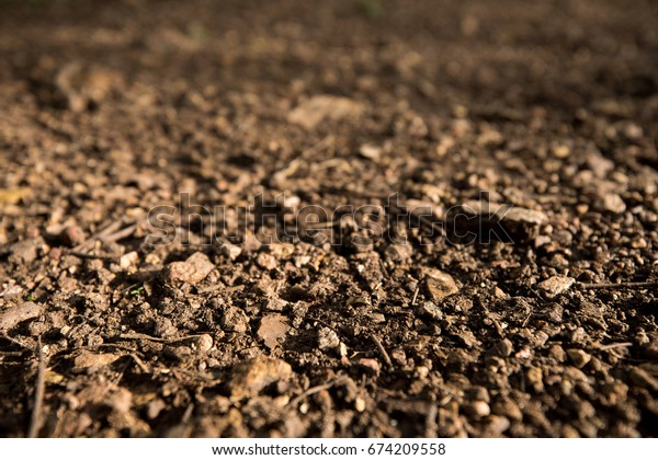 Soil texture with sunlight in forest
