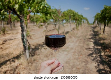 Soil for vine bushes and glass of wine in hand. Wineglass and grapevine at rural landscape.