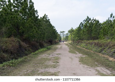 soil way and pine tree