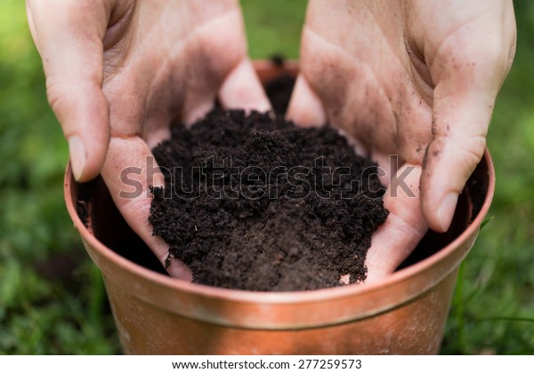 Soil in woman hands, plastic flower pot on grass background