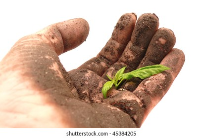 soil-caked hand holding a young green sprout
