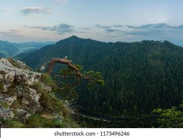 Sokolica drzewo zlamane  - Shutterstock ID 1173496246