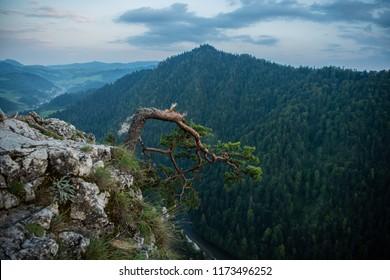 Sokolica drzewo zlamane  - Shutterstock ID 1173496252