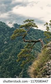 Sokolica Peak in Pieniny, Poland