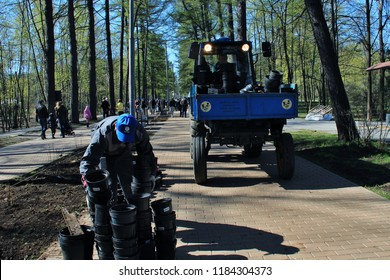 Sokolniki Park, Moscow - April 2014: Adults and children on a subbotnik plant trees, bushes and flowers on the alleys.