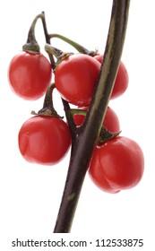 Solanum intergrifolium on white background