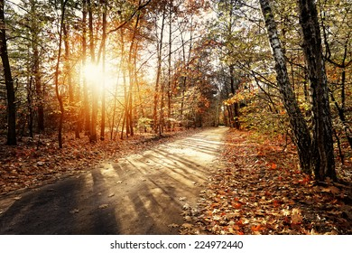 Solar autumn forest path in a beautiful forest