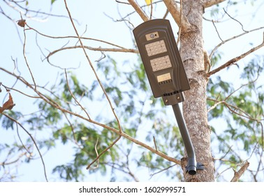 Solar cell power LED lamp sticking on tree for saving electricity energy use. alternative energy reform for good living life