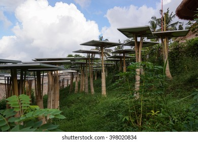 solar cell tree in green village bali indonesia
