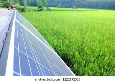 Solar cells used in power generation in rice fields