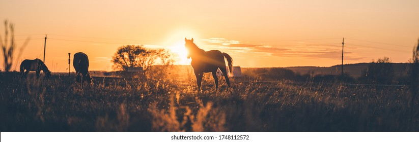 Solar energy on a background of a horse