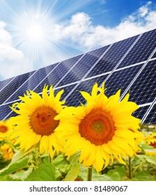 Solar energy panels on a sunflower field against sunny sky.
