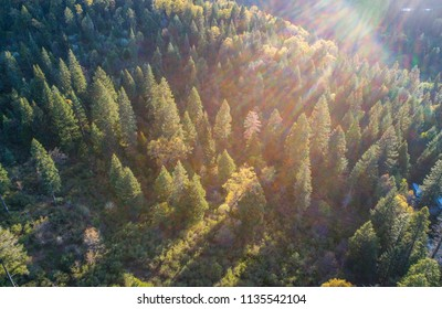 Solar flare sun beams of afternoon sunset aerial drone view above huge thick healthy Northern California Sierra Nevada Mountains thick forest nature landscape of tall pine trees