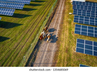 Solar panel produces green, environmentaly friendly energy from the setting sun. Aerial view from drone. Landscape picture of a solar plant that is located inside a valley with sheep