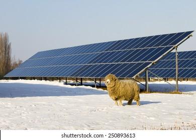Solar panel and Sheep