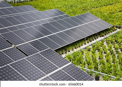 Solar panels on the building with a tree to heat