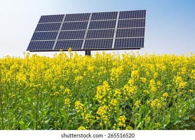 solar panels in rape flower fields, new energy over spring