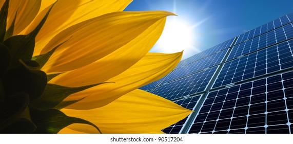 Solar panels and Sunflower against a sunny sky
