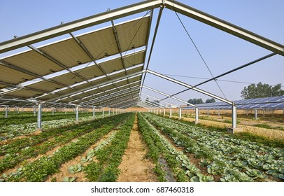 Solar photovoltaic panels and planted vegetables