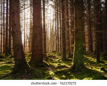 Solar radiation in the forest