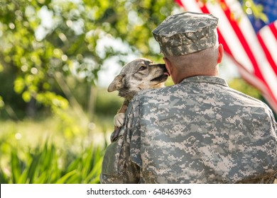 Soldier with military dog outdoors on a sunny day