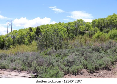 Soldier Summit Utah with sage brush, old boards, quaking aspen, pine trees and a larger power pole in the background