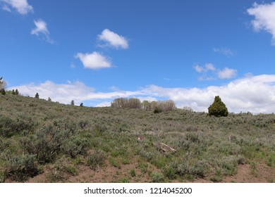 Soldier Summit Utah with sagebrush, a cedar tree and blue sky with white clouds