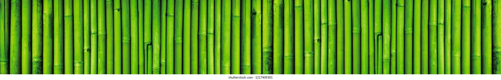 Solid background of green bamboo.