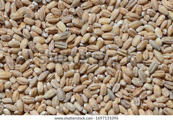solid-background-raw-pearl-barley-600w-1