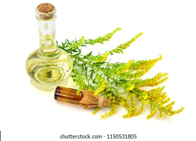 Solidago (Goldenrod) Medicinal Herb Plant Essential Oil Extract. Isolated on White Background.