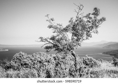 solitary - Shutterstock ID 598590719