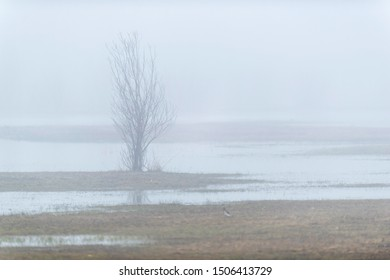 Solitary bare tree in misty lake.