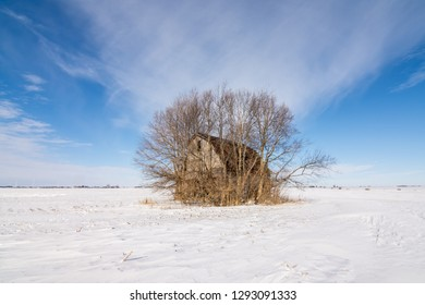 solitary barn overgrown with trees in the middle of a snow covered field.