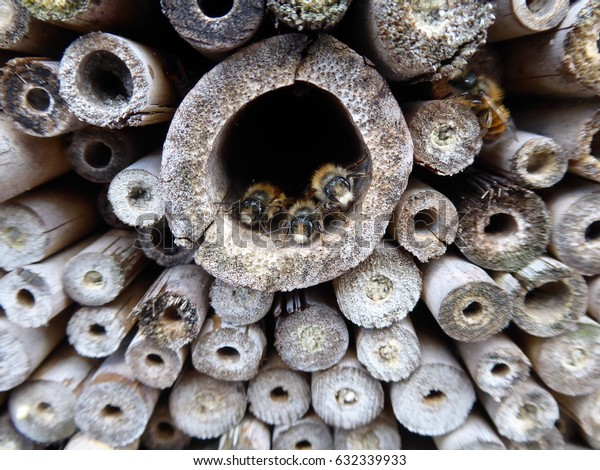 Solitary bees resting in an insect hotel