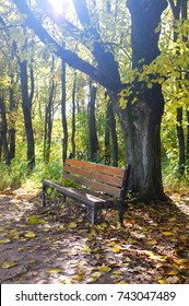A solitary bench in an oak forest.