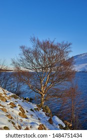 A solitary Birch Tree at the waters edge of Loch Lee in Glen esk, in the Angus Glens of Scotland.