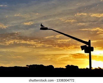 Setting Sun Spotlights Solitary >> Solitary Pole Images Stock Photos Vectors Shutterstock