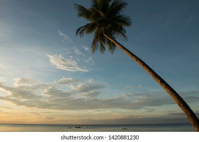 solitary coconut tree leaning towards the ocean in talikud island davao philippines