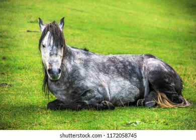 A solitary horse sits on the meadows and poses for the photographer in Ayder, Rize, Turkey.