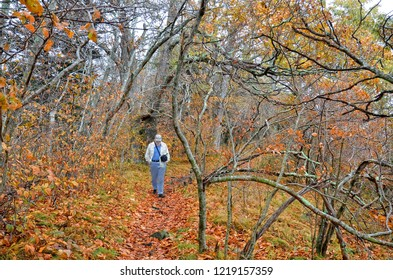 Solitary man with a camera hiking the woods in autumn.