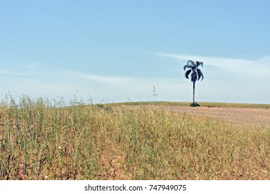 Solitary palm tree on the horizon, in arid and empty environment