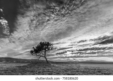 solitary pine in a rural setting where the clouds of the sky are concentrated with spectacular formations
