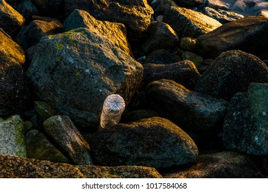 A solitary plastic bottle caught amongst the rocks as the morning sun refracts through it's creases and condensation.
