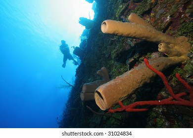 Solitary scuba diver and colorful corals