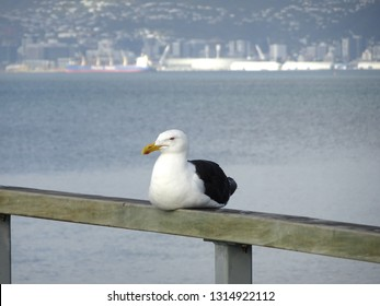 Solitary seagull peacefully sitting on wharf railing with calm harbour background  Petone Wellington New Zealand