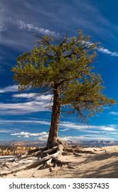 Solitary tree