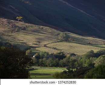 Solitary tree back-lit by shafts of sun on mountainside with heather. Troutbeck, Lake District, UK. October.