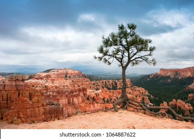 Solitary tree in Bryce Canyon National Park, Utah under Dramatic Sky